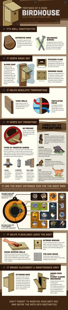 Features of a Good Bird Nest Box: This infographic has tons of information. Cornell Lab of Ornithology Features of a Good Bird Nest Box: This infographic has tons of information. Cornell Lab of Ornithology Bird House Feeder, Bird Feeders, Bird Nests, Bird House Plans, Bird Houses Diy, Bluebird Houses, Birds And The Bees, Bird Boxes, Nesting Boxes