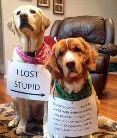 Cats , Dogs, Foods, Weddings , #dogsfunnyshaming   #featured #fun #funny