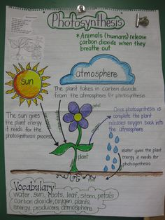 Photosynthesis anchor chart for Grade Science.something to use to help students understand photosynthesis? 7th Grade Science, Elementary Science, Middle School Science, Science Classroom, Science Fair, Science Lessons, Science Education, Teaching Science, Science For Kids
