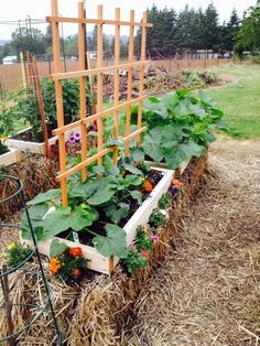 this straw bail idea might work in our garden for this year's pumpkins