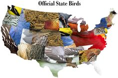 Official state birds