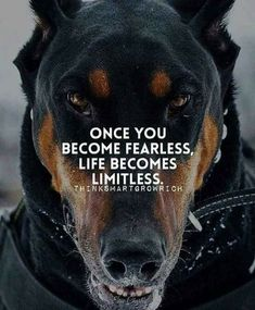 Fearless... That's our Doberman!