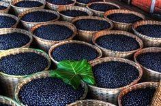 Baskets of freshly harvested acai berries. (Photo courtesy of Zola Acai)