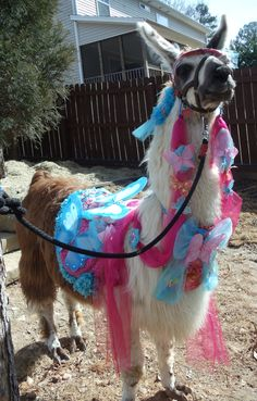 Llama Twist modeling the Spring Bling costume that I made. It has butterflies and flowers.