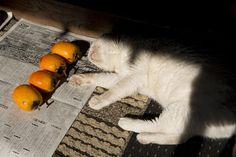 napping eggplant :P    Misao the Big Mama and Fukumaru the Cat Copyright © 伊原美代子/ Miyoko Ihara