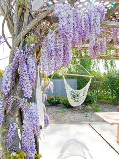 Relaxed Vineyard Terrace
