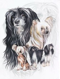 Chinese Crested with Ghost Image by BarbBarcikKeith...... (the Black and white one at top  looks like MaKenna!)