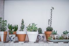 ZAMM Plants, Cactus, Succulents Vienna, Coffee Shop, Cactus, Planter Pots, Succulents, Concept, Space, Green, Flowers