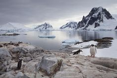 Antarctica and penguins. OMG!