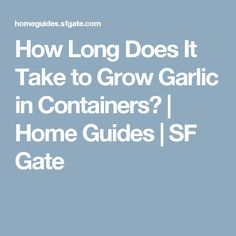 How Long Does It Take to Grow Garlic in Containers? | Home Guides | SF Gate