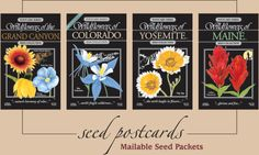 Postcards Seed bulk bags Fragrances represent different areas, national parks, states, provinces. Grand Canyon Colorado, Wildflower Seeds, Most Beautiful Flowers, Seed Packets, Native Plants, Wildflowers, Postcards, Bloom, Yard