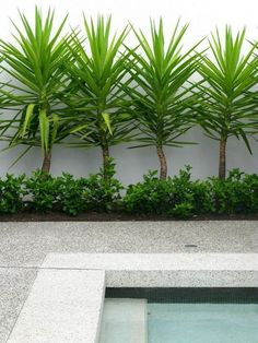 If you are working with the best backyard pool landscaping ideas there are lot of choices. You need to look into your budget for backyard landscaping ideas Tropical Landscaping, Tropical Garden, Front Yard Landscaping, Landscaping Ideas, Landscaping Around Pool, Modern Landscaping, Outdoor Landscaping, Landscaping Borders, Privacy Landscaping