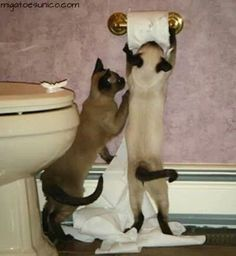 .darker kitty: we are gonna be in so much trouble. Lighter kitty: I know!.