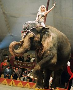 Reese Witherspoon riding bareback on an Elephant (Water for elephants) .