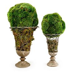 Naturally Preserved Moss Ball Lattice