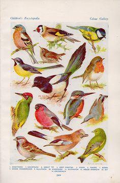 DE vogels die IN Groot-Brittannië - originele jaren 1950 dubbelzijdige bladwijzer broeden . 60 + jaar oud originele bladwijzer . gedrukt in Groot-Brittannië . afkomstig uit een antieke encyclopedie . ziet er mooi ingelijst . beide zijden hebben tal van mooie vogels . mooie vintage gevoel maatregelen 9 1/2 x 6 1/4 inch met inbegrip van grenzen *.*.*.*.*.*.*.*.*.*.*.*.*.*.*.*.*.*.*.*.*.*.*.*.*.*.*.*.*..*.*.*. Gecombineerde verzendingen Een verzending kosten voor prints en bookplates per…