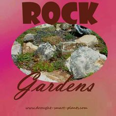 Rock Gardens filled with exquisite and tiny alpine plants, miniature ground covers and rocks to make it look like a mountain side have fascinated gardeners for ages...