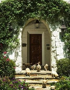 Sweet with the puppies, but I also love the arched doorway, stone, and ivy.