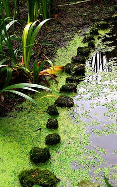 Stone path through water