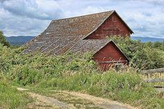 Barn and Vine Photograph