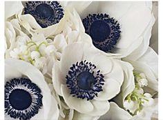 Floral - Anemones