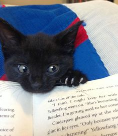 kitty in book