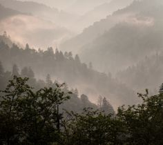 The Smoky Mountains, © Katherine Mann