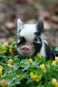 Cute pig sitting in flowers!