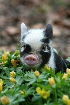 Cute pig sitting in flowers!