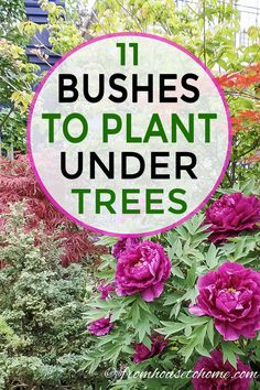 This list of bushes that grow under trees is awesome! I can't wait to try tree peonies, Japanese maples and boxwood in the shade garden in my backyard. #fromhousetohome #shrubs #gardenideas #shadegarden  #shadelovingshrubs #shadeplants #gardeningtipsandplants