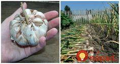 Garden Park, Garden Sculpture, Garlic, Cabbage, Flora, Gardening, Ale, Vegetables, Outdoor Decor