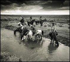 Cowboys And Horses - Bing Images