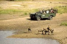 Luxury Safaris at Ngala Tented Camp in the Kruger Park, Southern Africa