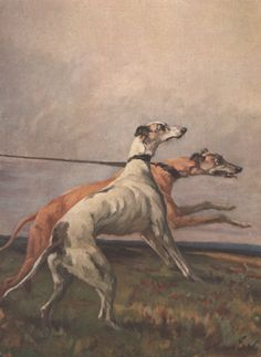 Greyhounds by Maud Earl (1864-1943)