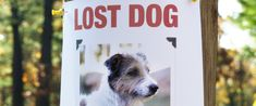 Some tips you might not have thought of if your dog becomes lost!