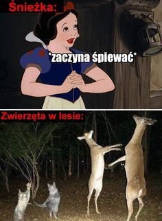 Wtf Funny, Funny Dogs, Funny Memes, Reaction Pictures, Funny Pictures, Why Are You Laughing, Funny Lyrics, Polish Memes, Cartoon Memes