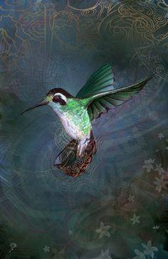 The Hummingbird - Digital Illustration - 11x17 poster $35