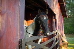 Elegant Equestrian Wedding at Historic Cedarwood | Cedarwood Weddings