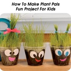 How To Make Plant Pals - Fun Project For Kids - http://www.hometipsworld.com/how-to-make-plant-pals-fun-project-for-kids.html