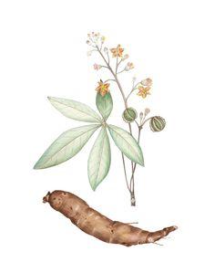 Arte Botânica-Gina Nogueira - DG2 Escritório de Arte