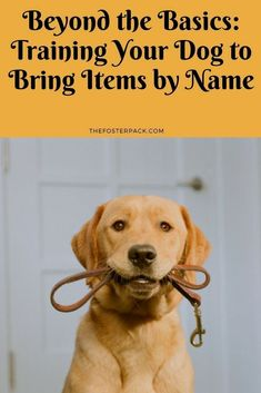Ideas for dog training -> If your pooch is always chewing, buy him rawhide bones or dog toys. These are generally manufactured for the dog's chewing needs. You will discover a large selection at supermarkets or a local pet shop. Training Your Puppy, Dog Training Tips, Potty Training, Training Videos, Training Classes, Training Schedule, Brain Training, Therapy Dog Training, Service Dog Training