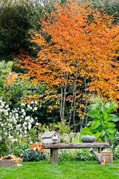 Apple trees create a colorful late-season backdrop to this garden rich in texture. | Photo: Photo:  Jim Westphalen | thisoldhouse.com