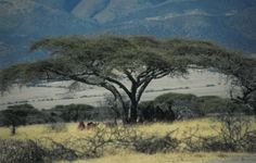 Discussion Questions by Chapter Problem Set, Serengeti National Park, African Proverb, East Africa, More Pictures, Novels, Middle, This Or That Questions, Image