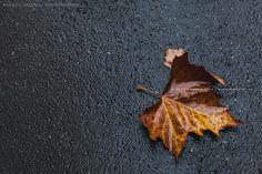 Im November fallen die Blätter wie von weit Marion's Blog | Marion's Blog
