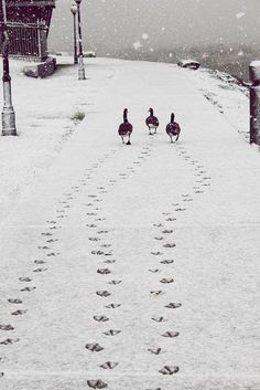 Waddle waddle in the snow.