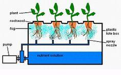 "Hydroponic Gardening Building an Aeroponic System (and explanation of ""aeroponics"") Backyard Aquaponics, Hydroponic Gardening, Hydroponics, Container Gardening, Hydroponic Growing, Organic Gardening, Aeroponic System, Aquaponics System, Psoriasis On Face"
