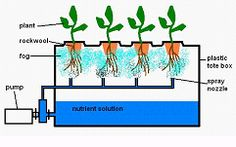 "Building an Aeroponic System (and explanation of ""aeroponics"")"