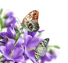fond d ecran fleurs,wallpapers