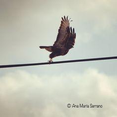 Despegando al infinito #biodiversidad #aves #medioambiente
