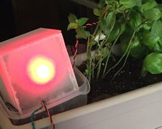build an arduino based monitor that will let you know if your indoor plants are